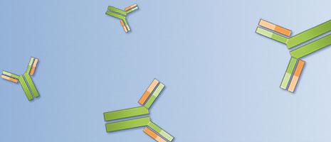 Kleine Moleküle als Antigen